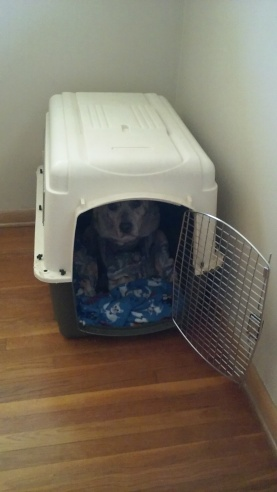 Mia in crate