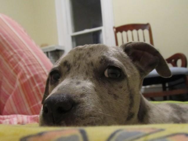 Mia pup close look