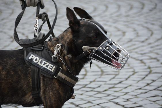 Dutch police-1321255_1920