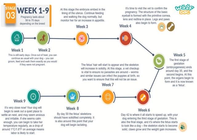 dog-pregnancy-week-by-week-calendar